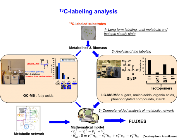 Screenshot of a flowchart that describes the C-labeling analysis process