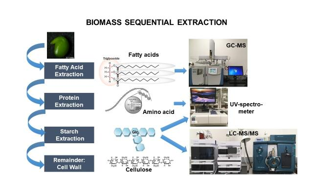 Screenshot of an infographic that describes the biomass sequential extraction process