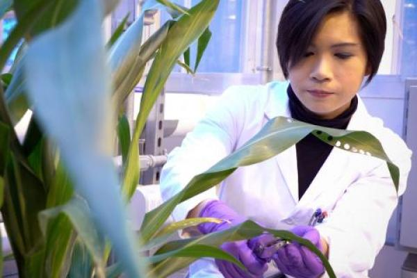 Producing More Efficient Bioenergy